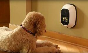 Гаджеты для домашних животных — видео